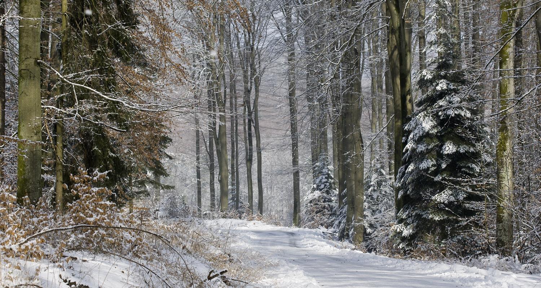 Faites le plein de nature en Alsace Bossue !