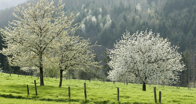 Obstgarten in blumen