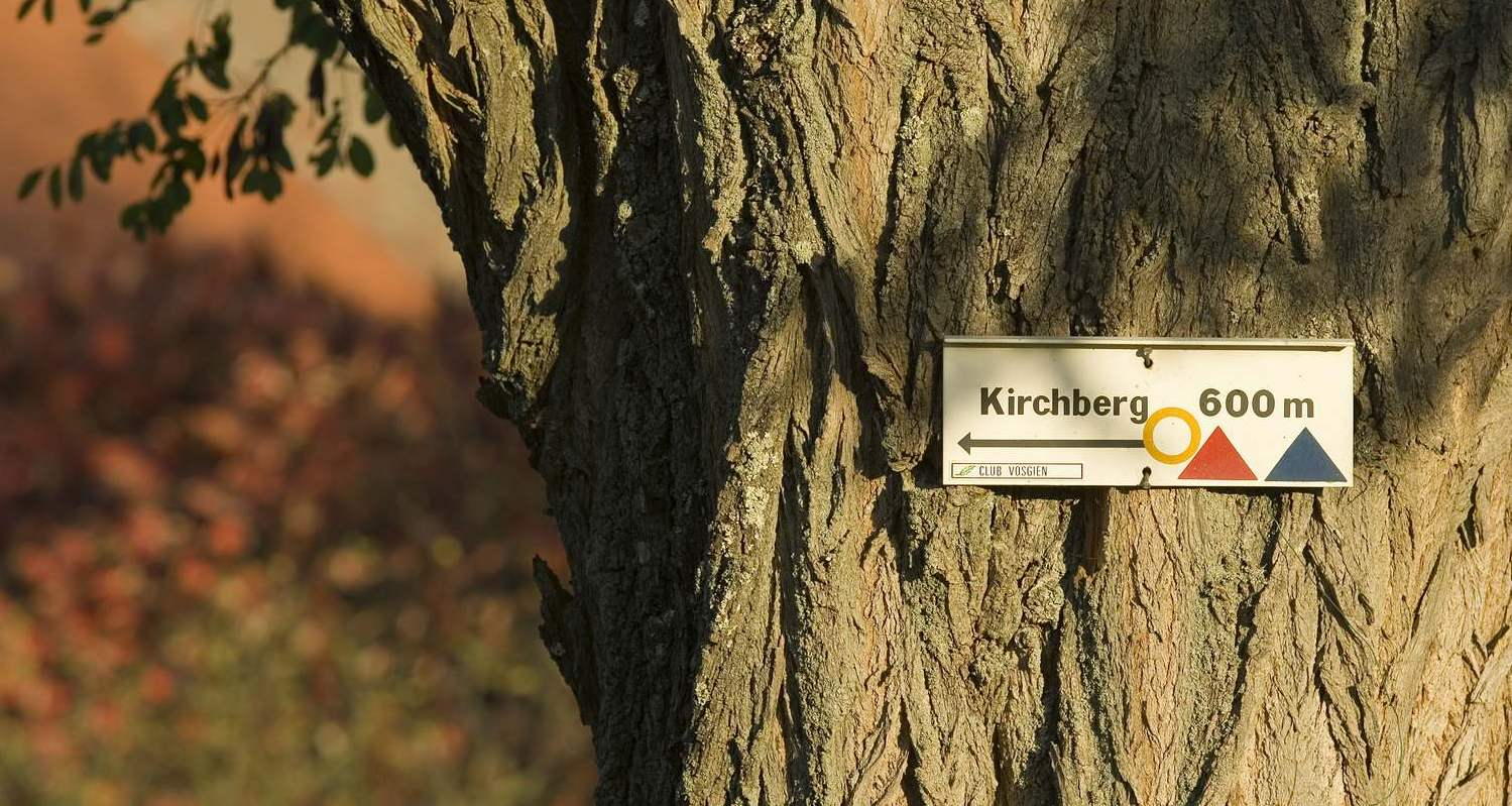 Randonnée autour du Kirchberg à Berg